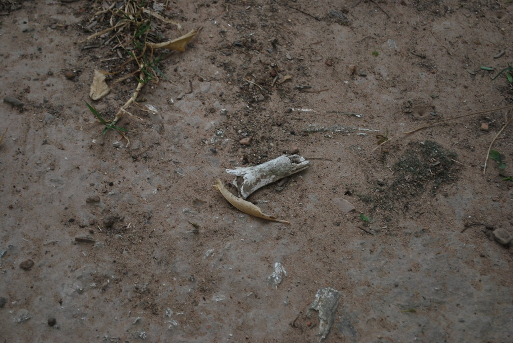 After rain washes away topsoil, human bones and teeth often protrude through the ground at Cheoung Ek (Photo: Simon Roughneen)