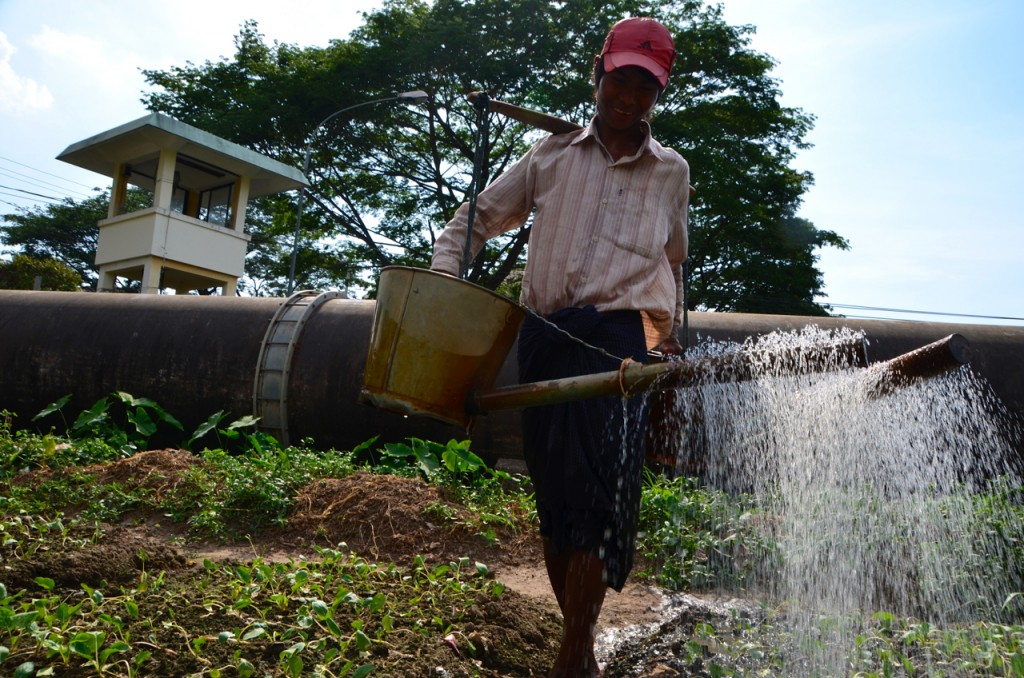 Man tends to market garden near main Rangoon city water pipeline in Yankin township (Photo: Simon Roughneen)