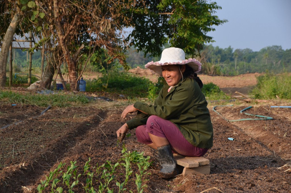 Woman at work at organic farm at Boung Phao. Behind the trees is the Mekong riverbank (Photo: Simon Roughneen)