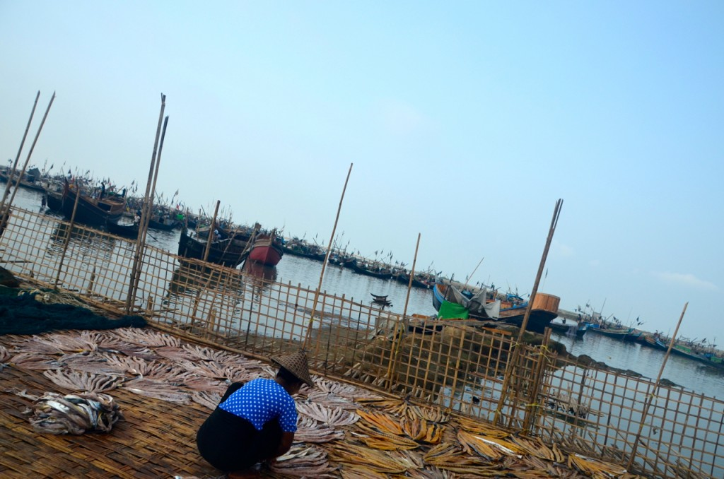 Drying fish at Thay Chaung harbour (Photo: Simon Roughneen)