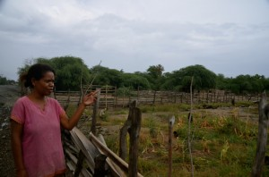 Bendita Ramos surveys her damaged corn crop (Photo: Simon Roughneen)